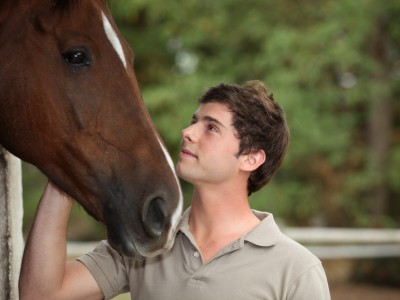PTSD equine therapy