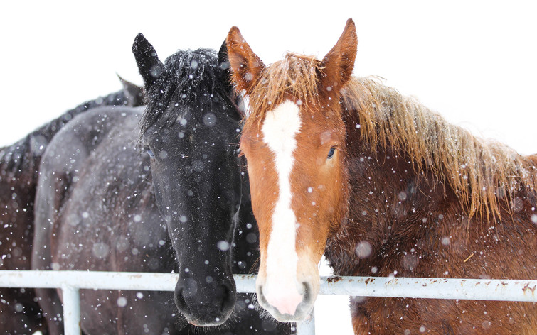 caring-for-your-horse-during-winter