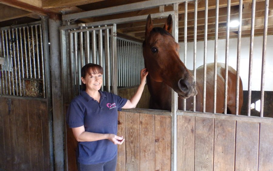 Switcharooney at the Racehorse Rescue Centre